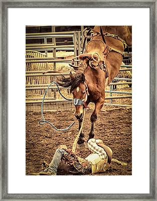 Bucking Framed Print