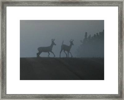 Bucks In Fog Framed Print