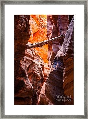Buckskin Log Framed Print
