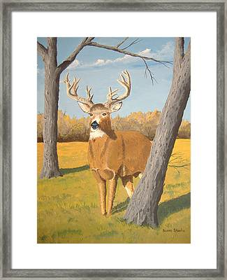 Bucky The Deer Framed Print by Norm Starks