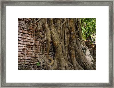 Buddha Head Encased In Tree Roots Framed Print by Paul W Sharpe Aka Wizard of Wonders