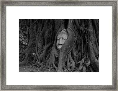 Buddha Head In Roots Of Bodhi Tree Framed Print by Zestgolf