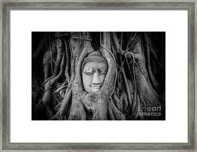 Buddha In The Banyan Tree Framed Print