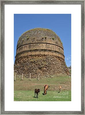 Buddhist Religious Stupa Horse And Mules Swat Valley Pakistan Framed Print