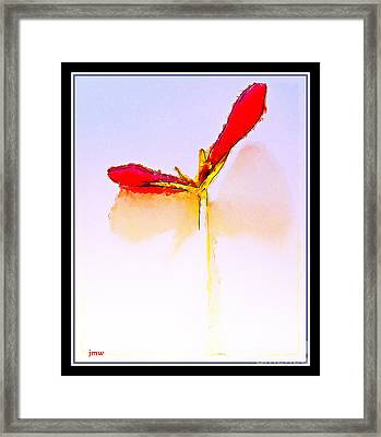 Budding Amaryllis  Framed Print by Joseph Welsh