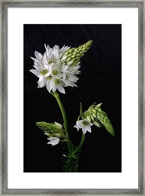 Budding Beauty Framed Print by Kim Andelkovic