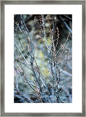 Budding Bush Framed Print