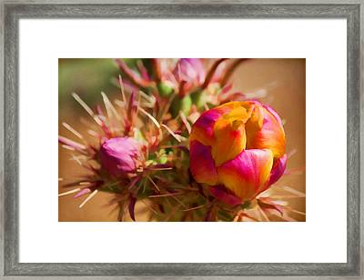 Budding Cactus Framed Print by Fred Larson