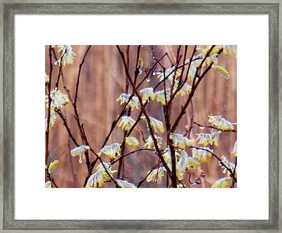 Budding Drops Framed Print by Wild Thing