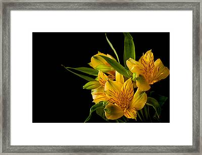Framed Print featuring the photograph Budding Flowers by Sennie Pierson