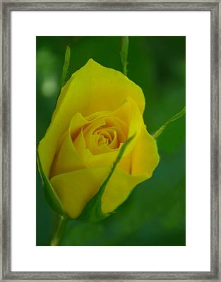 Budding Happiness Framed Print by Rima Biswas