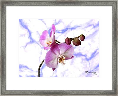 Budding Orchids Framed Print