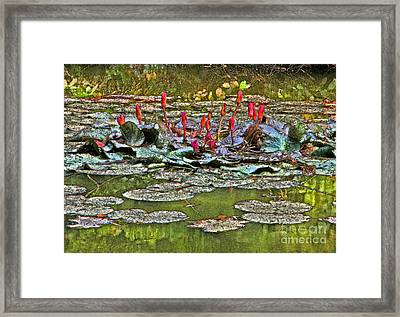 Budding Passion Framed Print by Charline Xia