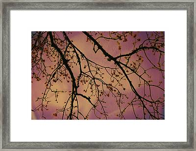 Budding Tree Framed Print