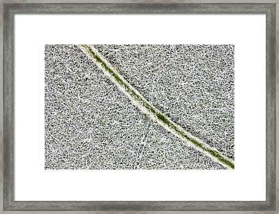 Buddleia Leaf Framed Print by Dr Keith Wheeler