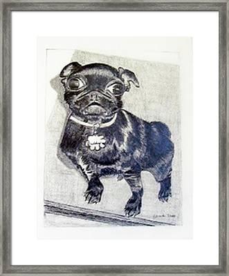 Buddy Framed Print by Jamie Frier