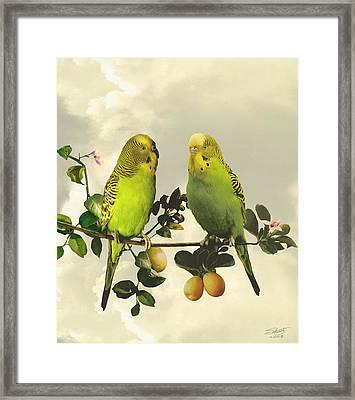 Budgerigars In Kumquat Tree Framed Print by IM Spadecaller
