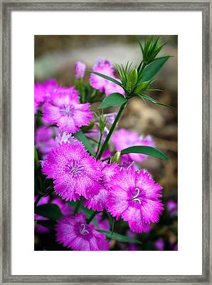 Buds And Blooms 1 Framed Print