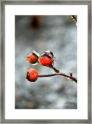 Buds On Ice Framed Print by Bonnie Myszka