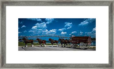 Budweiser Clydsdales And Blue Water Bridges Framed Print