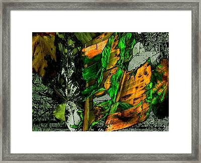 Buenos Aires 5 Framed Print by Horacio Carrena