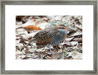 Buff Banded Rail Framed Print