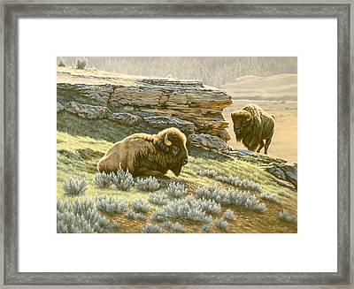 'buffalo At Soda Butte' Framed Print