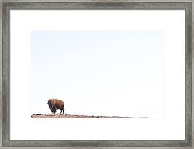 Buffalo Country Framed Print
