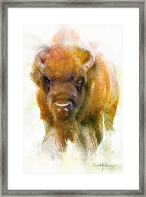 Da176 Buffalo II Daniel Adams Framed Print