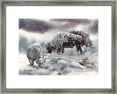 Buffalo In Snow Framed Print