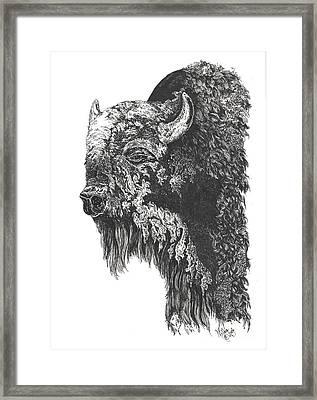 Buffalo In Spring Framed Print