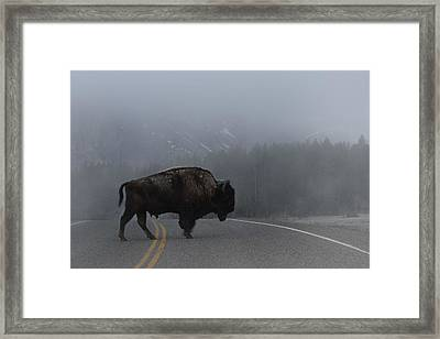 Buffalo In The Mist Framed Print