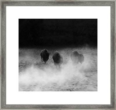 Buffalo Framed Print by Janice Spivey