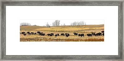 Buffalo Late Fall Framed Print