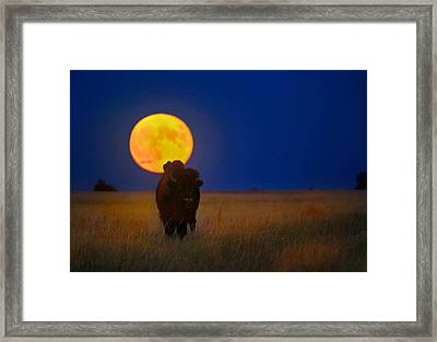 Buffalo Moon Framed Print by Kadek Susanto