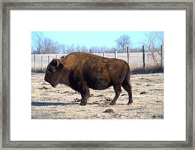 Buffalo Nickle Framed Print by Bonfire Photography
