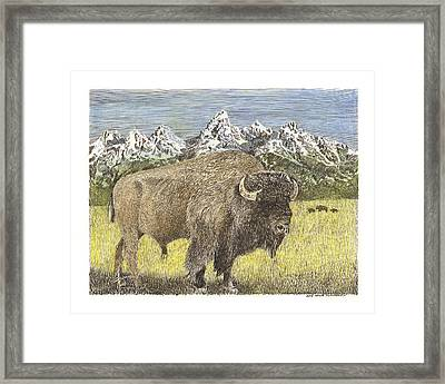 Buffalo Of Yellowstone National Park Framed Print