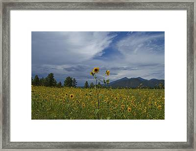 Buffalo Park 0118 Framed Print
