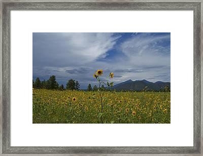 Buffalo Park 0118 Framed Print by Tom Kelly