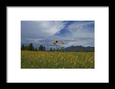 Tom Kelly Framed Prints