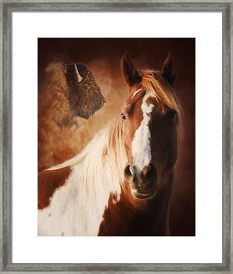 Buffalo Pony Framed Print by Ron  McGinnis