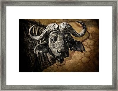 Buffalo Portrait Framed Print by Mike Gaudaur