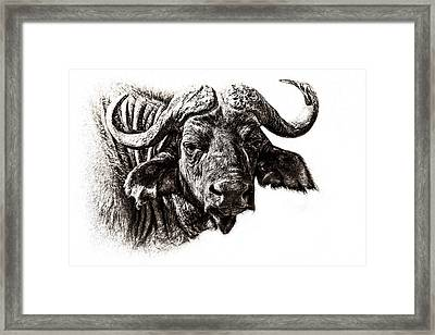 Buffalo Sketch Framed Print by Mike Gaudaur
