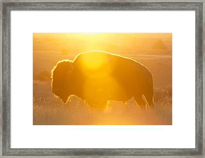 Framed Print featuring the photograph Buffalo Sunrise by Kevin Bone