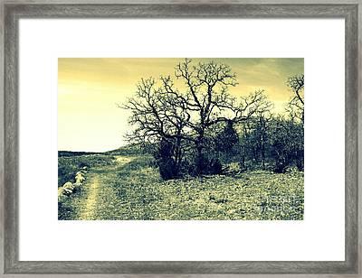Buffalo Trail Framed Print by Mickey Harkins