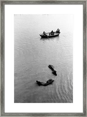 Buffaloes And Boat Framed Print by Jagdish Agarwal