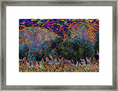 Buffaloes Fighting Framed Print by Wingsdomain Art and Photography