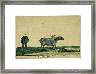 Buffalos Framed Print by British Library