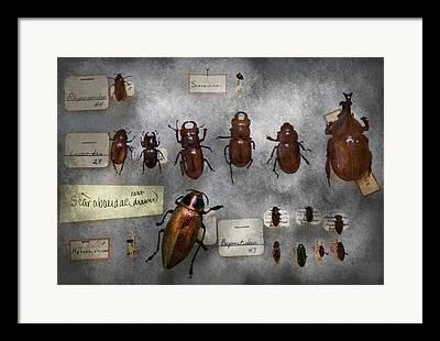 Insect Problem Framed Prints