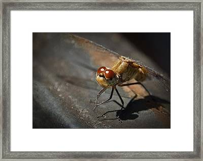 Bug-eyed Framed Print by Christine Nunes